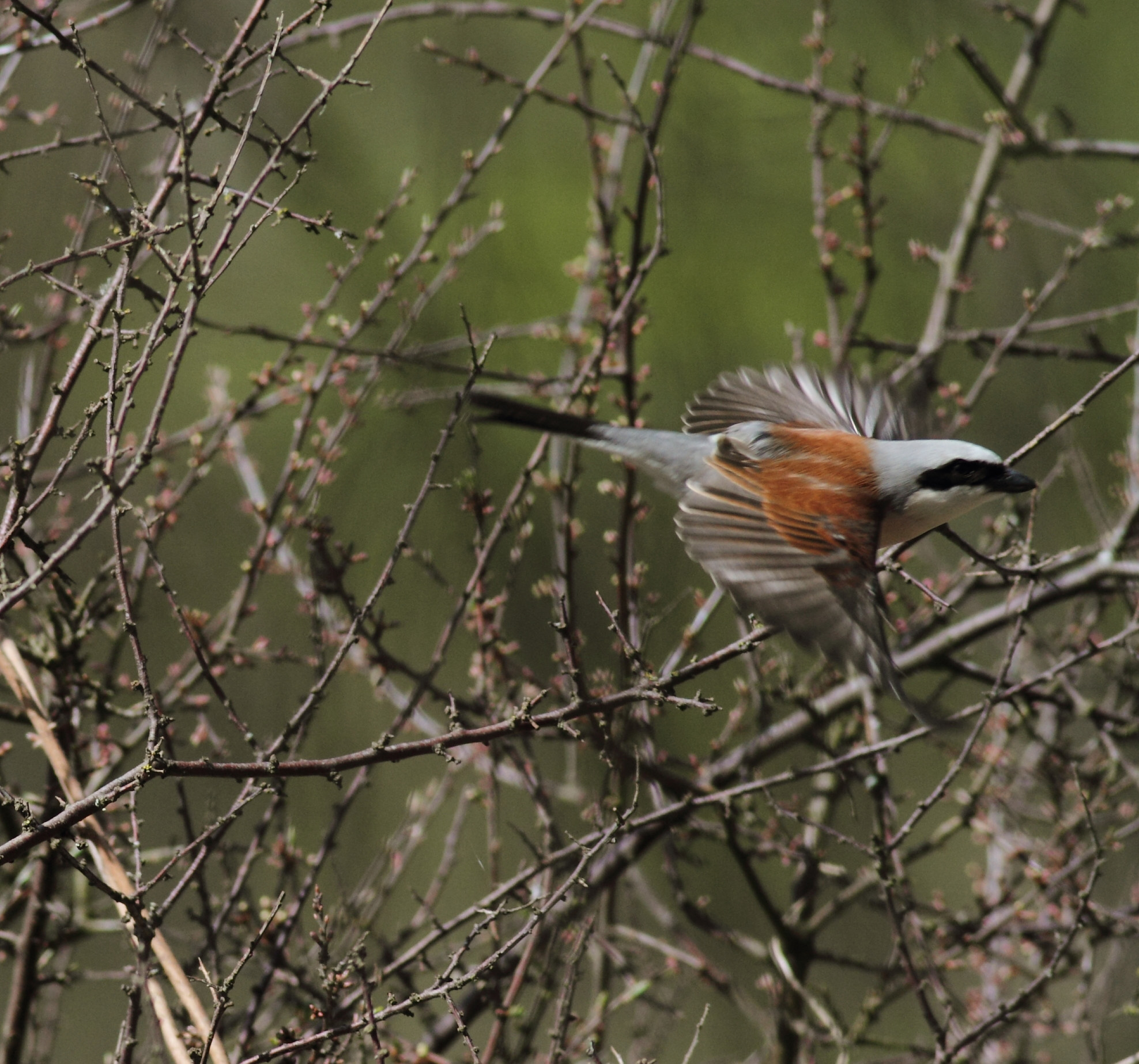 Bird Data Logger : Drought in the horn of africa delays migrating birds
