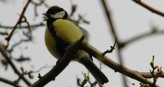 The physical structure of cities plays role in altering birds' songs