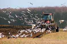 In Denmark, 34 million tons of animal manure are produced annually.