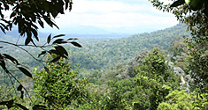 The rainforests of Southeast Asia.