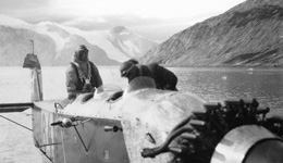 1930 photo from glaciers in Greenland. Photo credit: Arctic Institute in Copenhagen