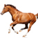 Read more about: Experts disagree on horses with incoordination