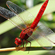Read more about: Climate warming favours light-coloured insects in Europe